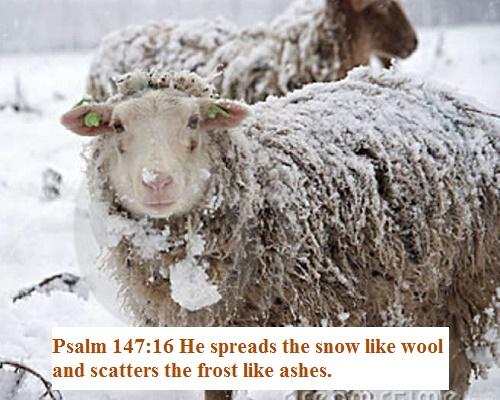 Psalms 147 16