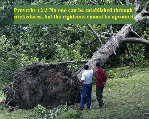Proverbs 12 3