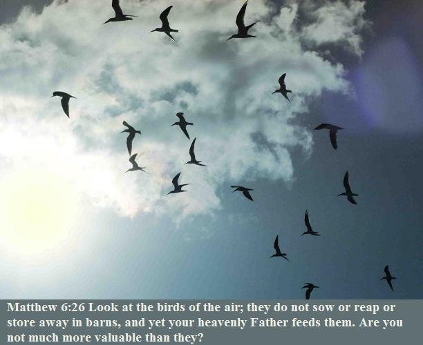 Matthew 6 26