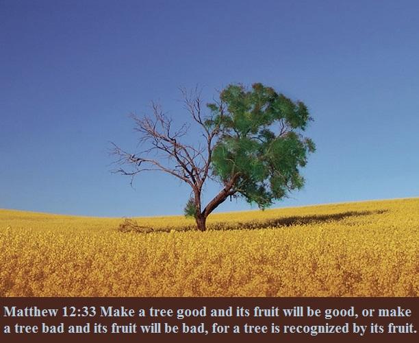 Matthew 12 33