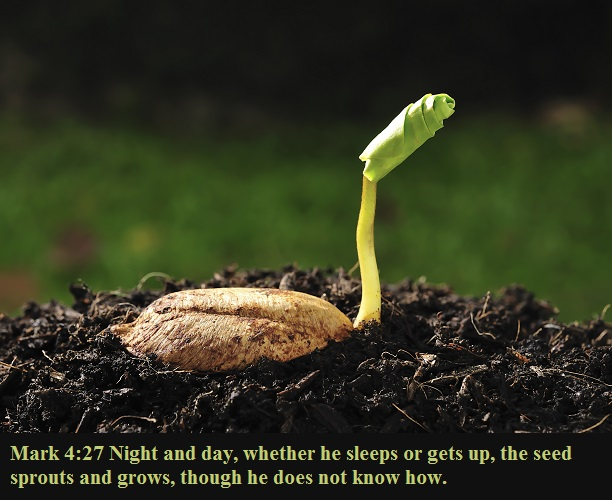 Mark 4 27